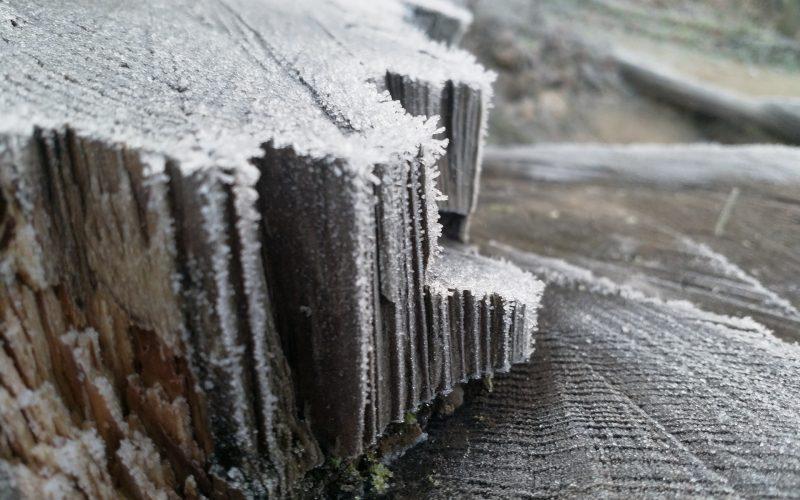 Frost am Baumstumpf